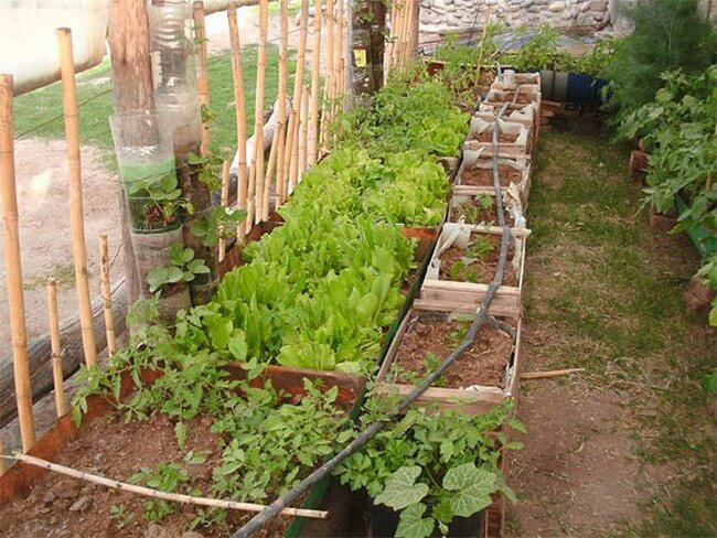 Vegetable-Container-Garden-The-Art-In-Life-2 (1)