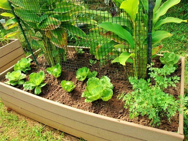 Vegetable-Container-Garden-The-Art-In-Life (2)