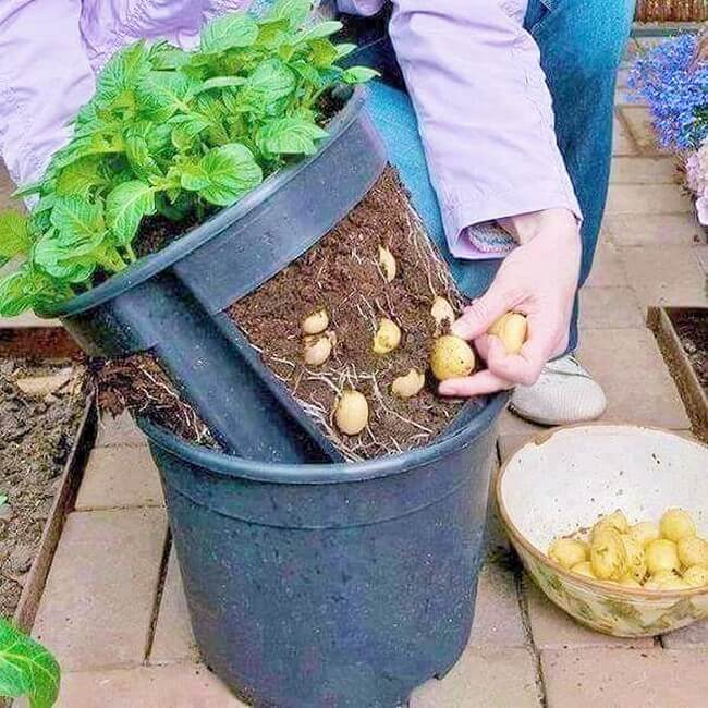 Vegetable-Container-Garden-The-Art-In-Life-3 (2)