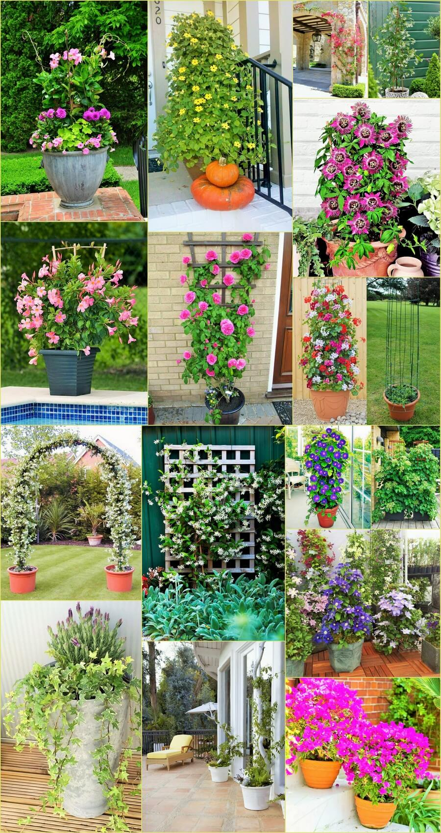 DIY Home Garden Ideas