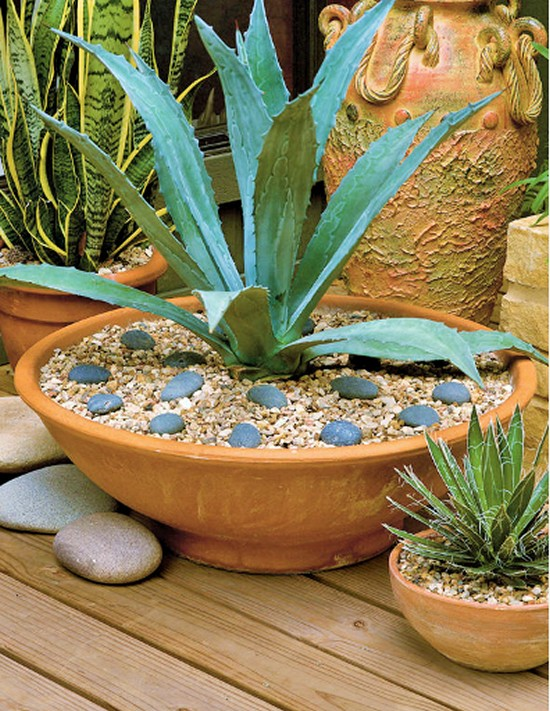 Agave Container Gardening Ideas-3 (2)