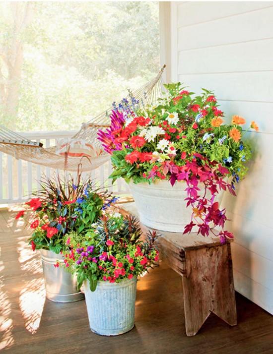 Bargain Blooms-Gardening Ideas 4 (2)