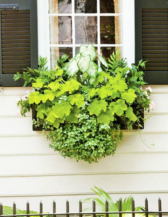 Brighten a Shady Spot -Gardening Ideas-5 (2)