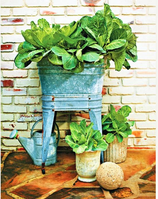 Collard Greens-Gardening Ideas (2)