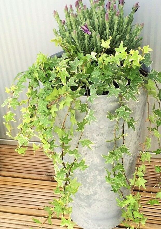 DIY Home Garden Plants-11 (2)