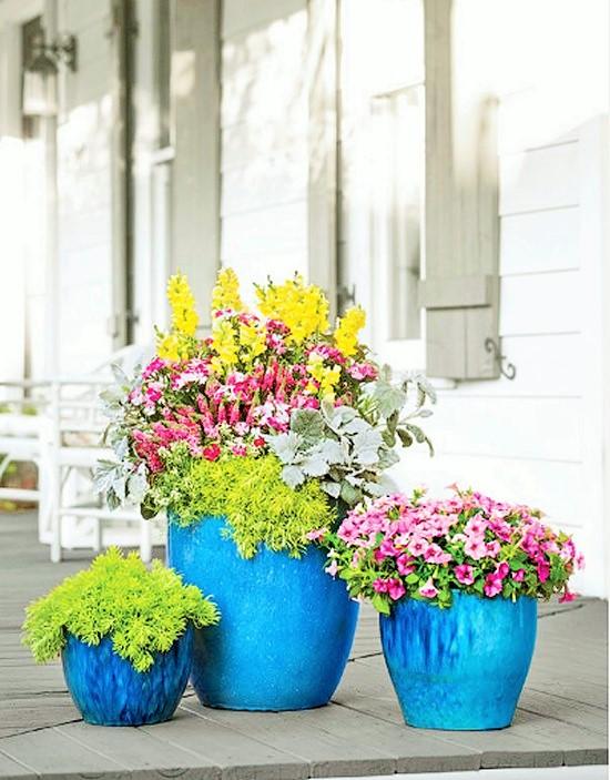 Gardening Ideas Quick Container Combo (2)