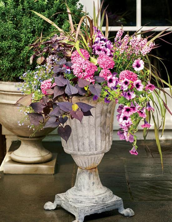 Geraniums Built-Gardening Ideas-7