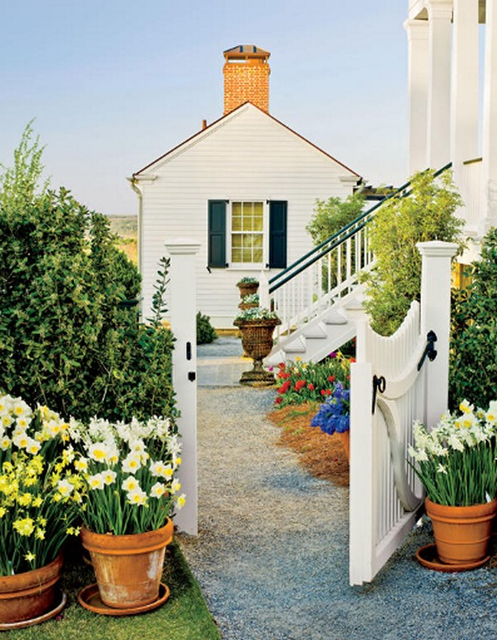 Grow Daffodils in Containers-Gardening Ideas