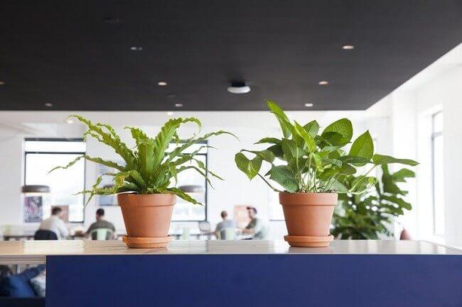 DIY-indoor-garden-ideas-6