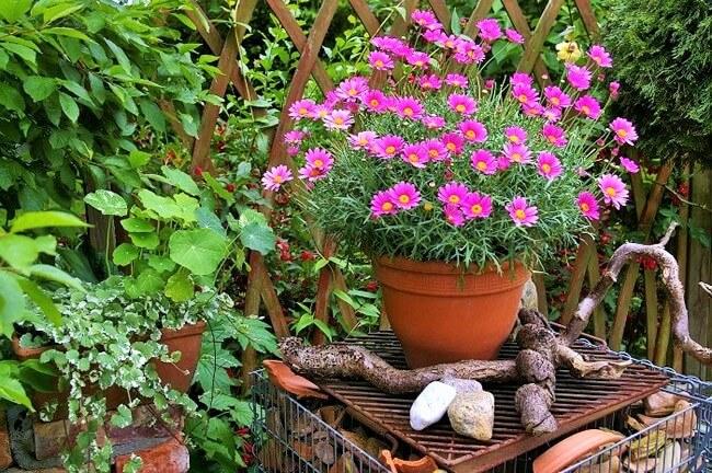 Beautiful Flower Garden Design-9