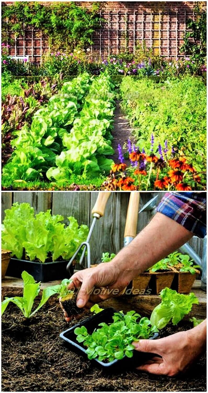 DIY-Garden-ideas (2)
