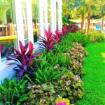 The Decor home-with -samal shade plants. (9)