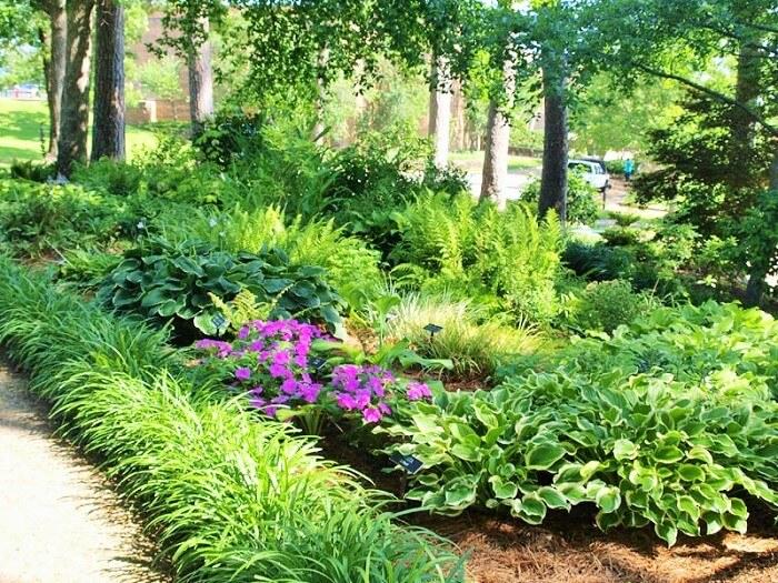 backyard-shade-garden-plants