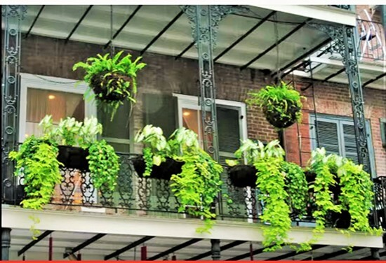 Container Gardening Ideas 7 (3)
