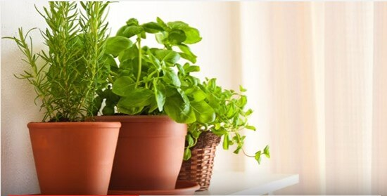Container Gardening Ideas-5