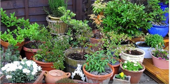 Container Gardening Ideas-1