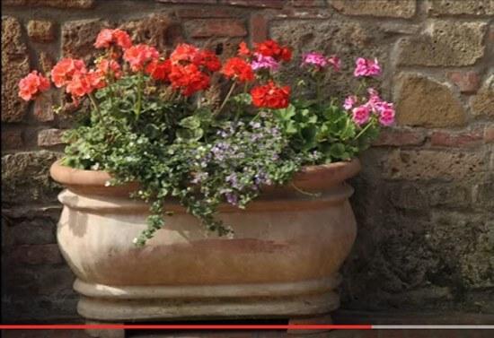 Container Gardening Ideas-3