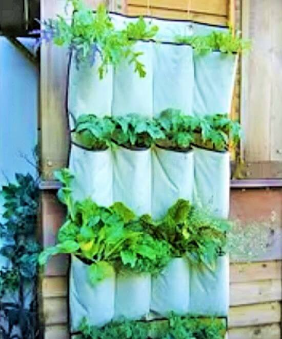 Creative gardening ideas 5