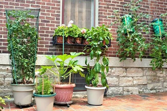 Garden-Container-Growing (2)
