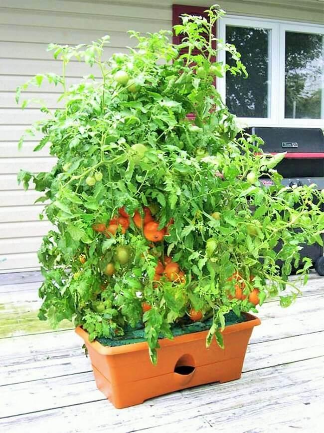 GrowBox-Self-watering-planter (2)