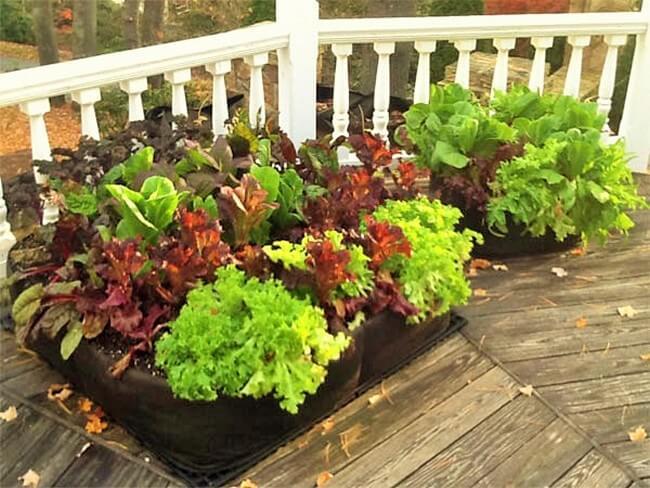 Vegetable-Container-Garden (2)