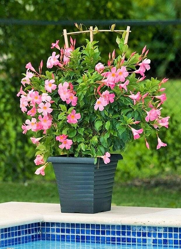 DIY Home Garden Plants-10 (2)