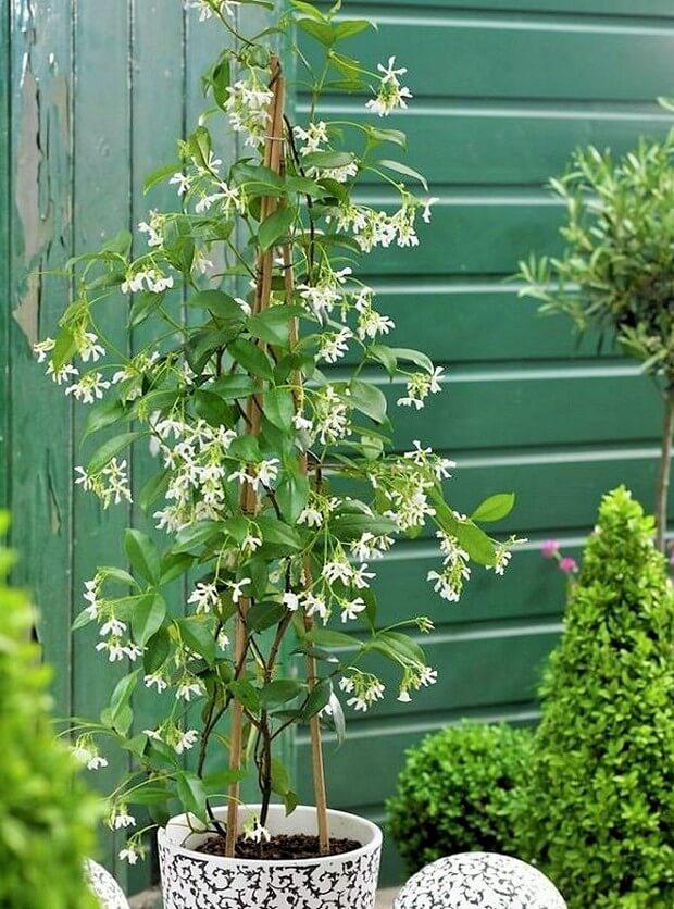 DIY Home Garden Plants-12 (2)