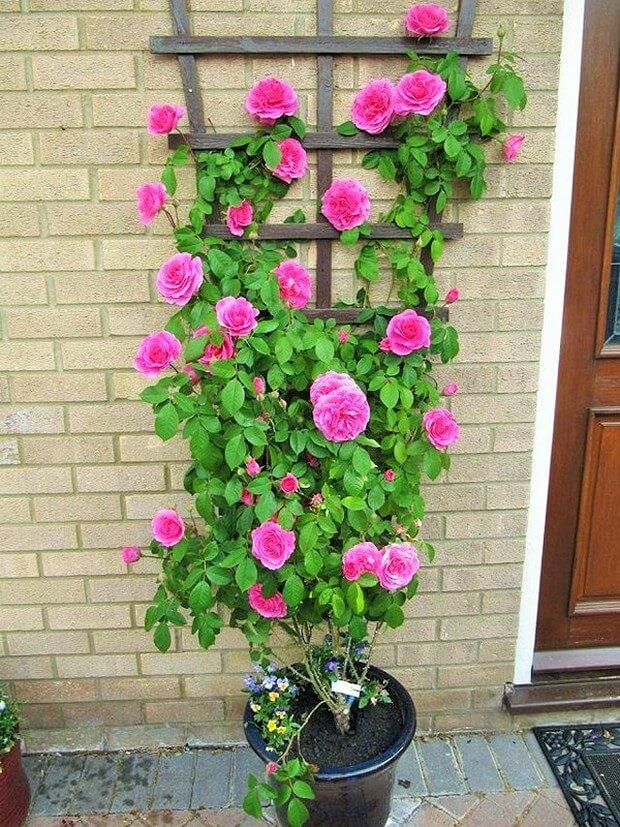 DIY Home Garden Plants-13 (2)