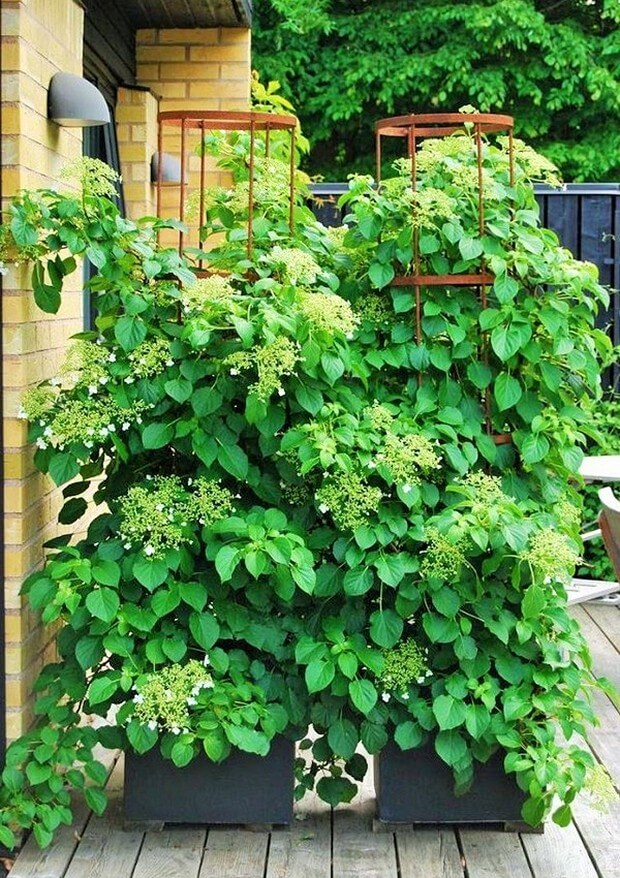 DIY Home Garden Plants-14 (2)