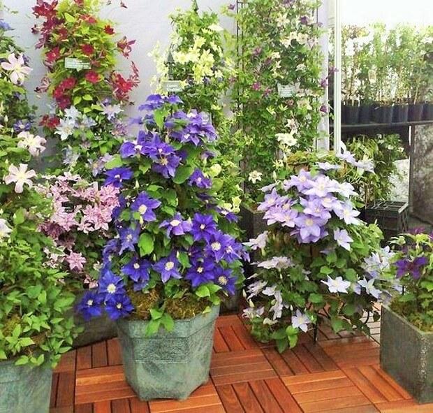 DIY Home Garden Plants-15 (2)