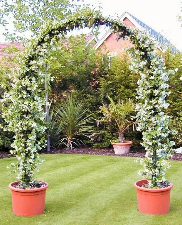 DIY Home Garden Plants-2 (2)