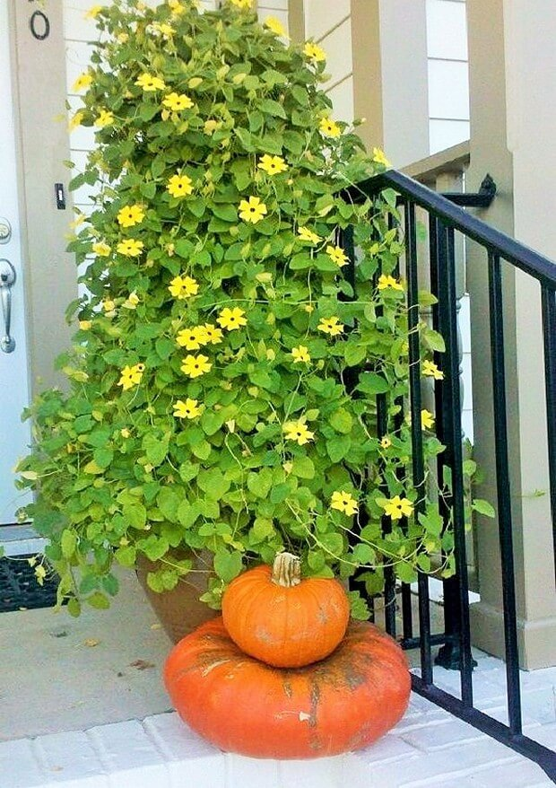 DIY Home Garden Plants (2)