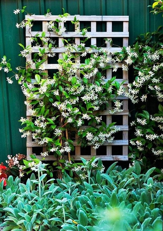 DIY Home Garden Plants-4 (2)