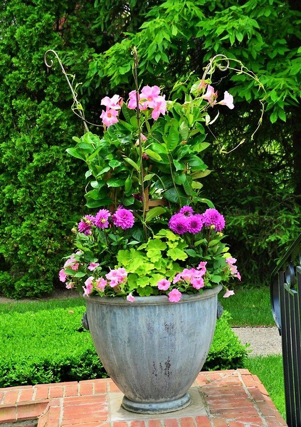 DIY Home Garden Plants-7 (2)