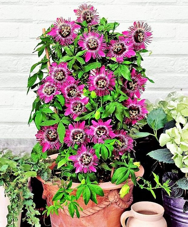 DIY Home Garden Plants-8 (2)