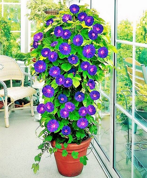 DIY Home Garden Plants-9 (2)