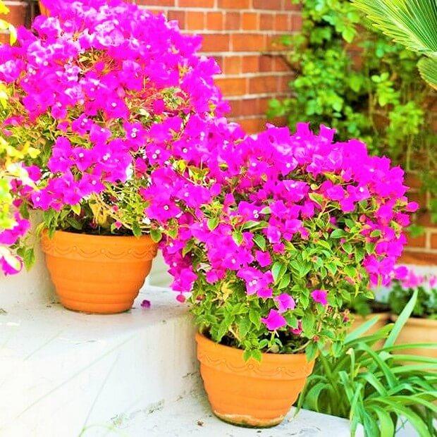 DIY Home Garden Plants16 (3)