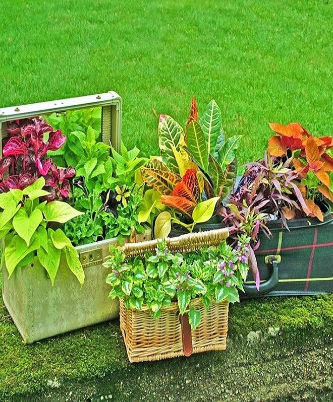 DIY_unique-Recyclable-container-garden-Ideas-6