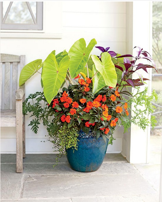 Gardening Ideas-1-Tropical Punch