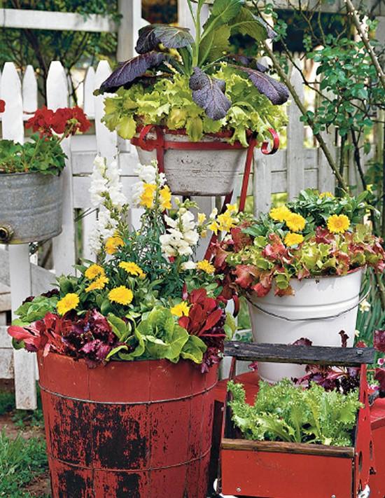 Lettuce amp Ornamentals -Gardening Ideas