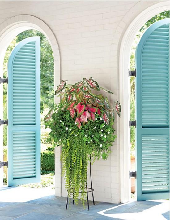 Made for Shade-Gardening Ideas