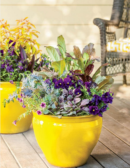 Show Your True Colors- Gardening Ideas