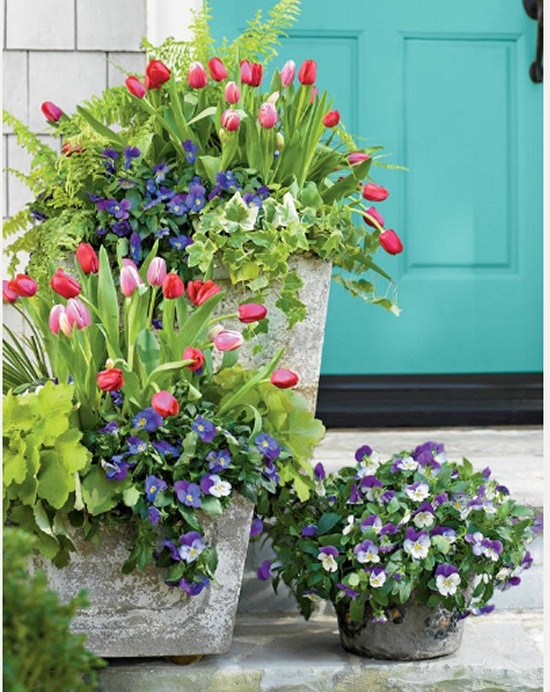 Tulips Pansies Acorus Heuchera Gardening Ideas