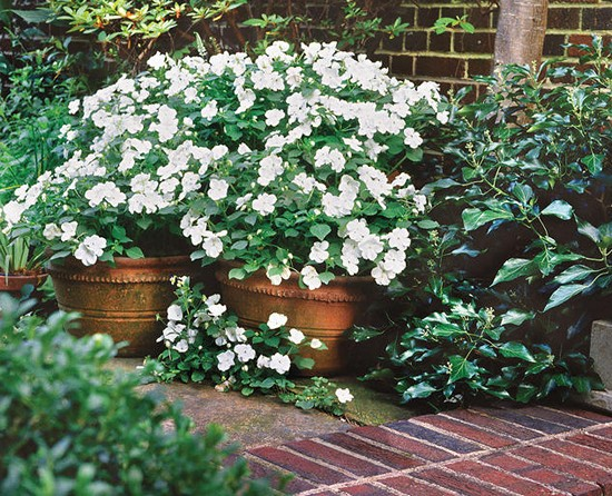 White Impatiens Gardening Ideas
