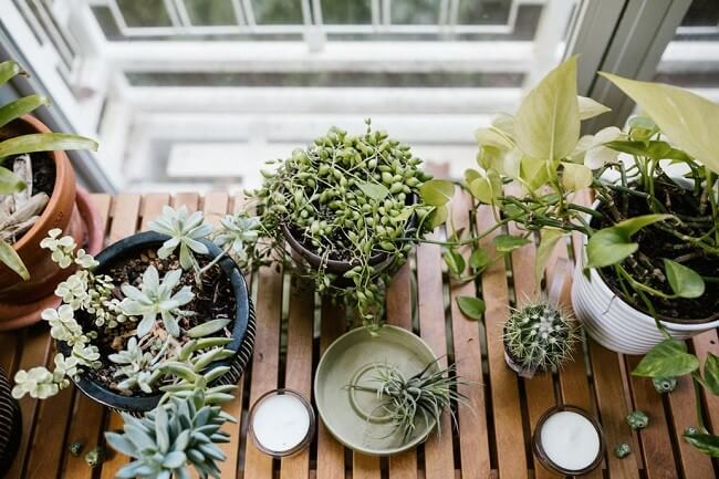 DIY-indoor-garden-ideas-2