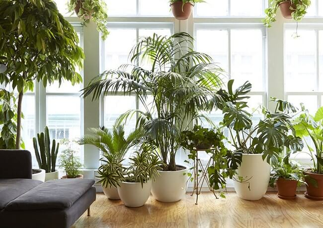 DIY-indoor-garden-ideas-8