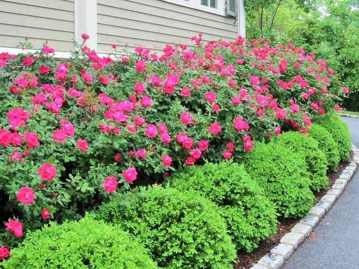 Beautiful-Front-Yard-Landscape-Garden-Ideas-23