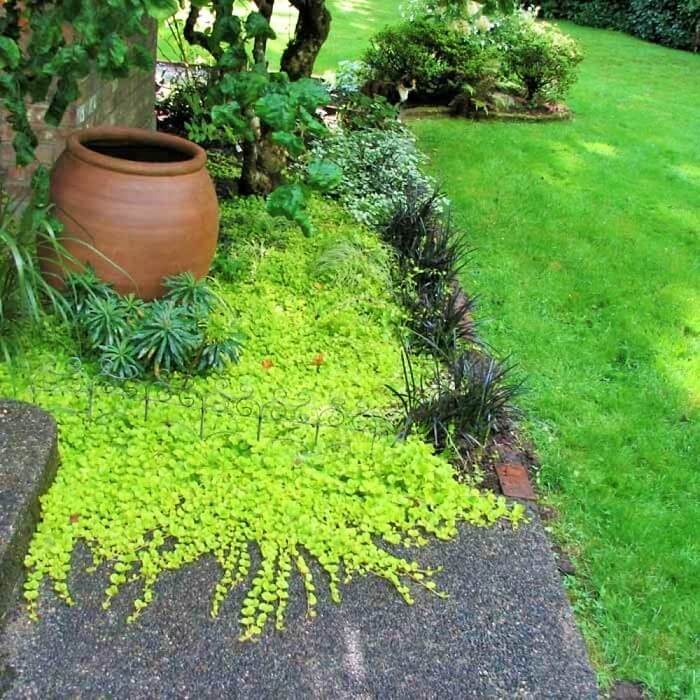 Simple-and-Beautiful-Garden-Ideas-6