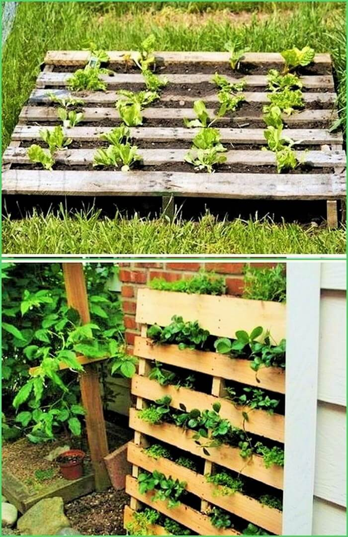 Garden DIY Pallets Ideas (2)