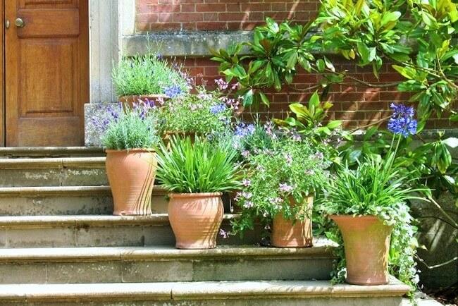 Beautiful Flower Garden Design-8